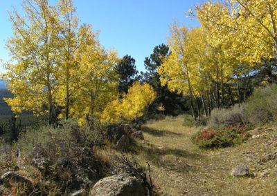 Swit-Trail,-aspens