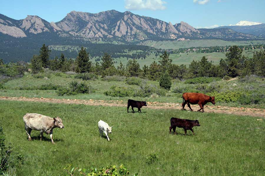 Boulder County's Resident Ranchers